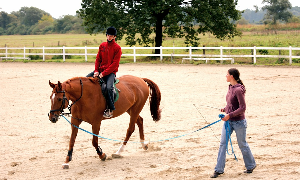 AAE mention poney