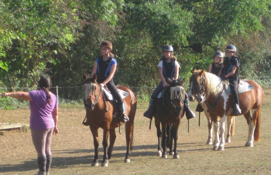 AAE option poney