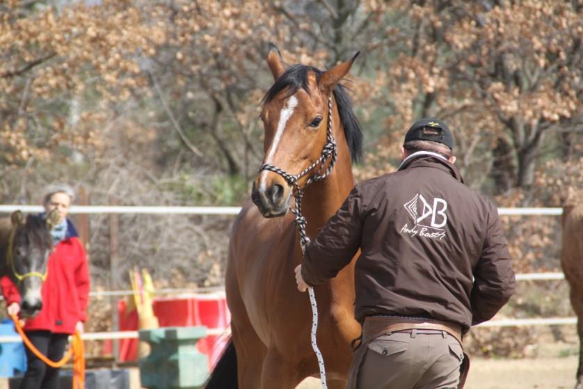 equitation-ethologique-2