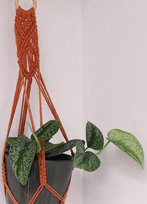 Suspension pour plante terracotta