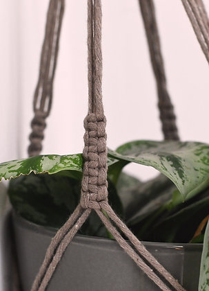 Suspension pour plante coffee