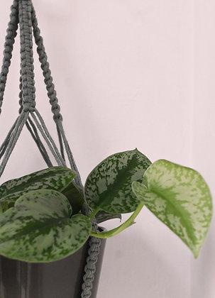 Suspension pour plante bleue