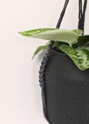 Suspension pour plante noire