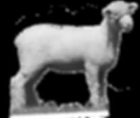 Local Alberta Lamb