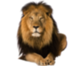 lion_PNG23258.png