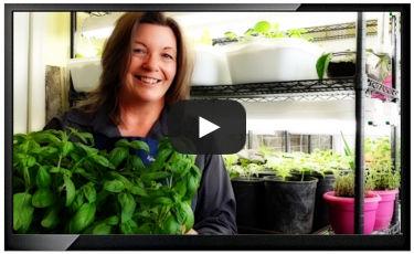grow-a-garden-indoors.jpg