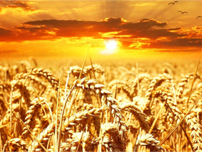 Bring In The Final Harvest