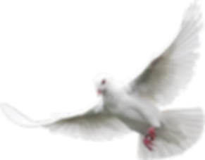 white-dove-holy-spirit-png-3.png