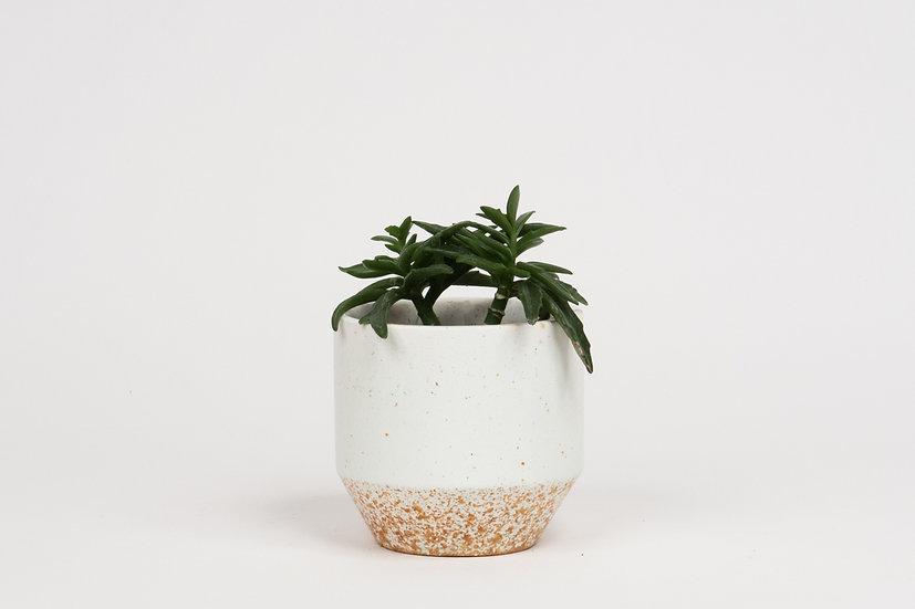 Mini Pot #388