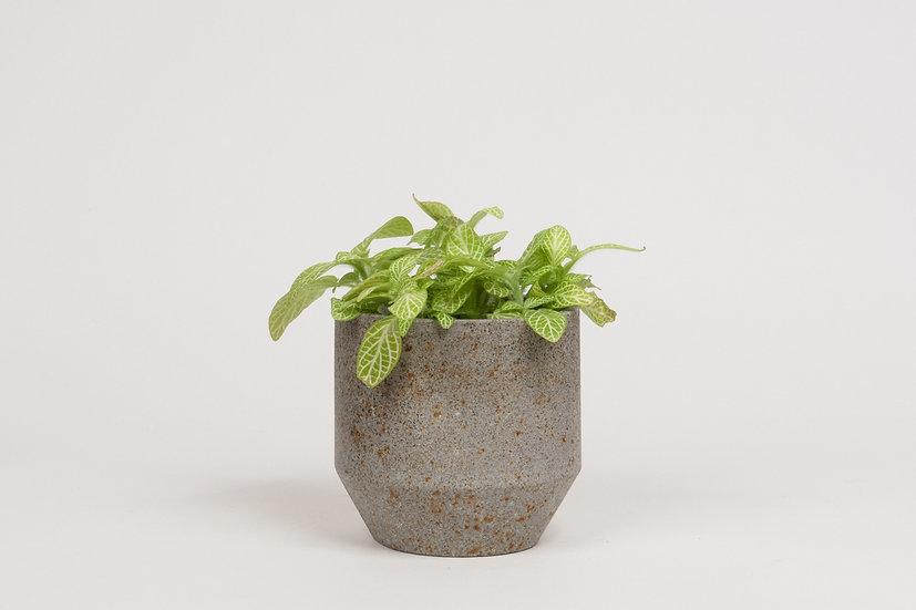 Mini Pot #337