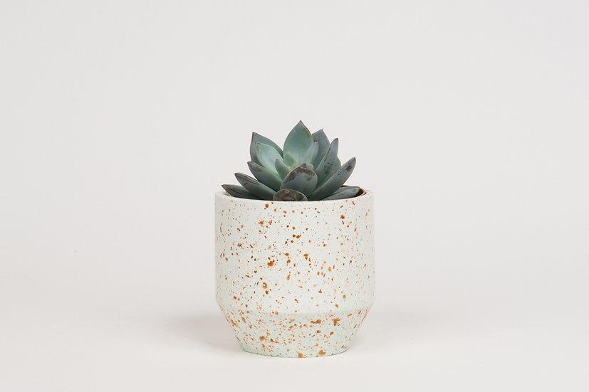Mini Pot #378
