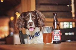 Dog-friendly-The-restaurant.jpg