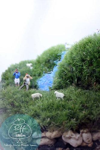 SHEEP PHOTOGRAPHER