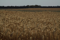 depozit agricol