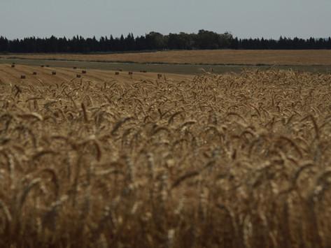Empresa de granos Amaggi emite US$ 750 millones en bonos verdes