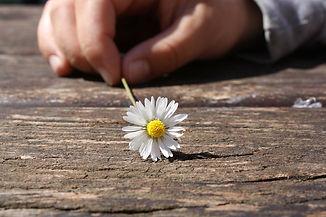 daisy-75190_1920.jpg