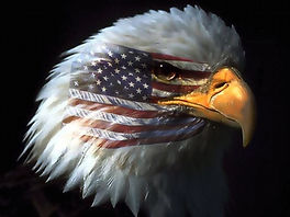164042985-bald-eagle-wallpapers.jpg