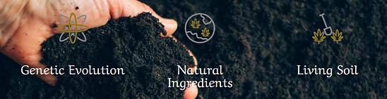 dh soil.PNG