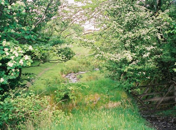 Green Path.jpg