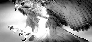 130530-Eagles-claw-2_edited_edited_edite