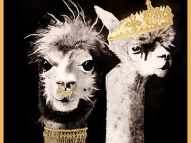 Royal Alpacas