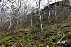 Gergovie face nord