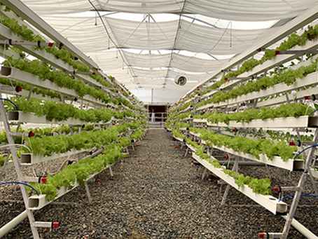 The next Generation Approach of Hydroponic grow system