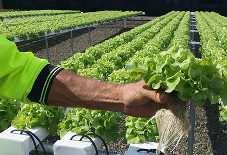 5 Pros and Cons of Hydroponic Farming