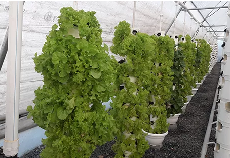 5 Essential Commercial Greenhouse Equipments That a Grower Must Have