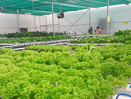 The Best Hydroponic Farming – The New Age Farming