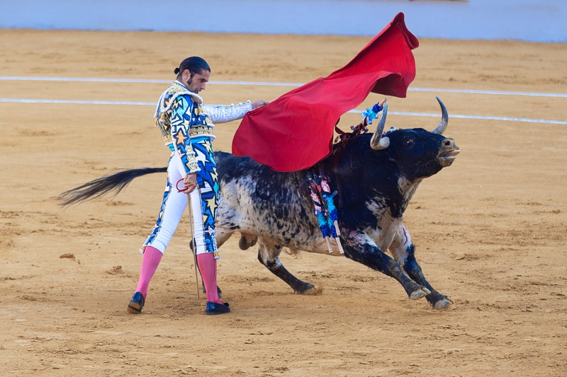 bull-sports-performance-bullring-tradition-bullfighting-147874-pxhere.com