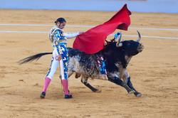 bull-sports-performance-bullring-tradition-bullfighting-147874-pxhere.com