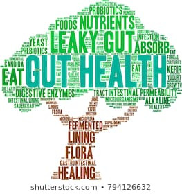 The Rainforest That Is Your Gut And How To Get It Healthy - Part 1