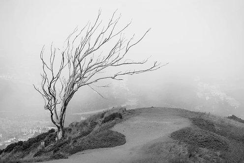 Tree of Live