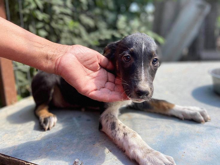 Viola, born April 2020