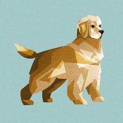 Golden Retriever Illustration
