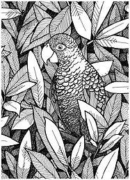 djungle+bw+parrot.jpg