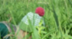 green hat3.jpg