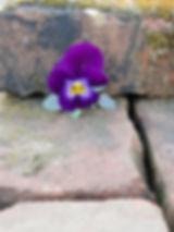 counseling_flower.jpg