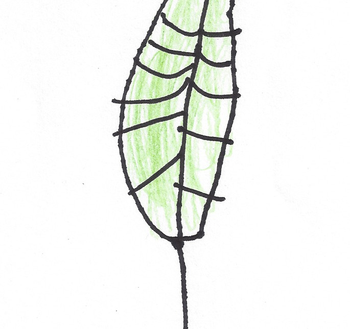 Dynasty's leaf
