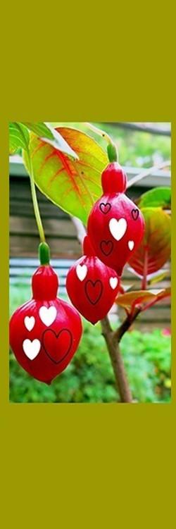 BM_Crimson Hearts