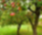 Organic Garden Park Margaret River