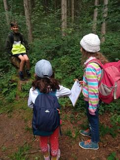 Ökosystem Wald kennenlernen