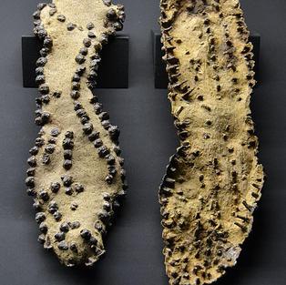 Bild 3: Sohle der Römersandalen
