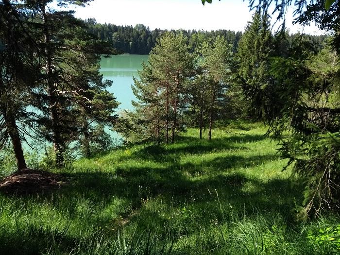 Lichter Kiefernwald bei der Schongauer A