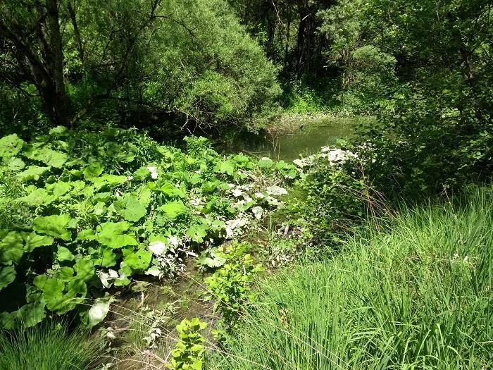 Auwaldbereich mit stehendem Wasser am Le