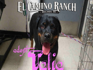 Adopt Talia!