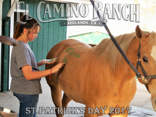 Luck of the Irish at El Camino Ranch!