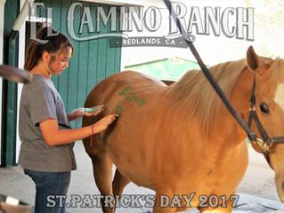 Luck of the Irish at El Camino Ranch!
