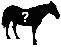 Can You Guess The Horse of the Month?